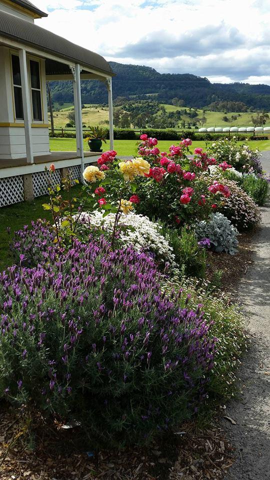 garden-pic
