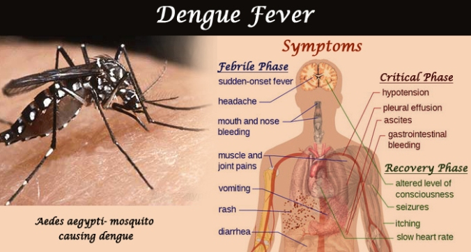 Dengue-Fever-Symptoms-Treatment-Prevention