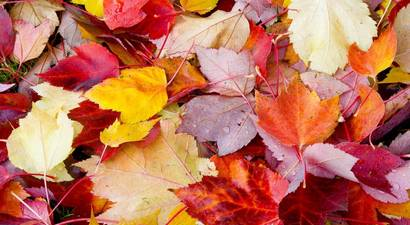 fallen-leaves.jpg.410x225_q70_crop-smart